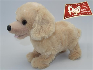 -Pies reagujący na komendy Labr MAD62604